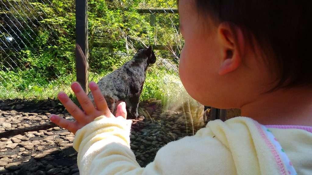 Fuji Safari Park Gotemba Shizuoka
