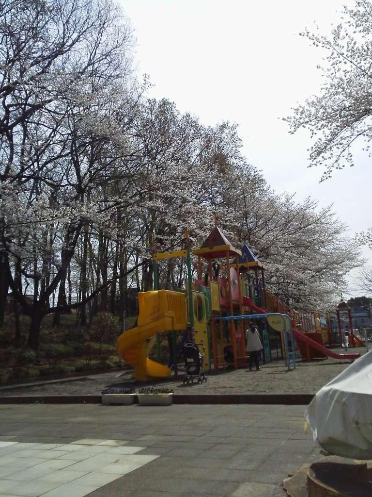 Kitamoto sakura matsuri cherry blossoms at the playground