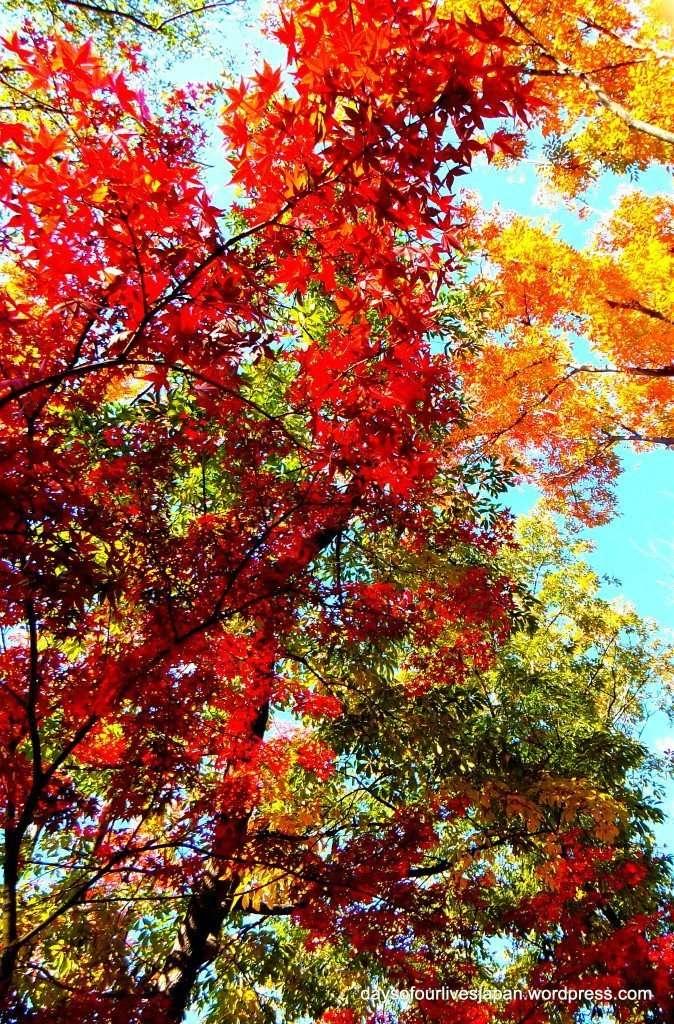 autumn in isanuma park