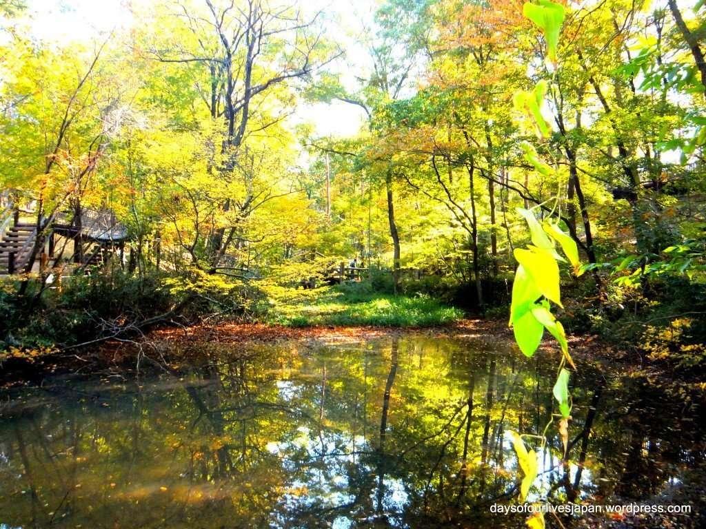 Fall colors Autumn leaves Shinrin Park Musashi Kyuryo National Government Park Namegawa