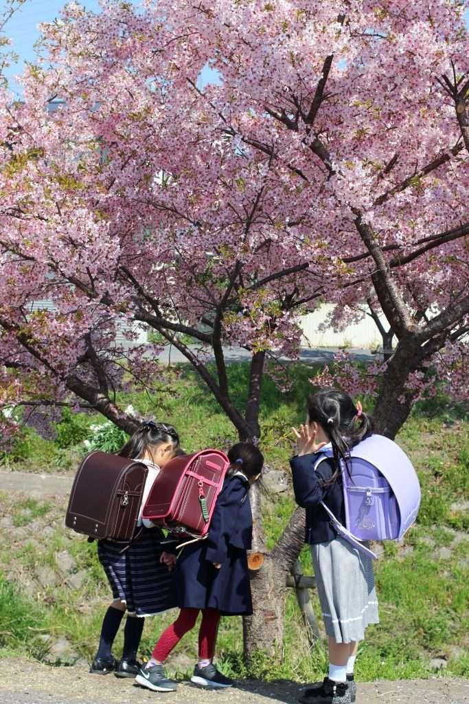 Randoseru blessing at Kawagoe Hikawa Jinja Saitama