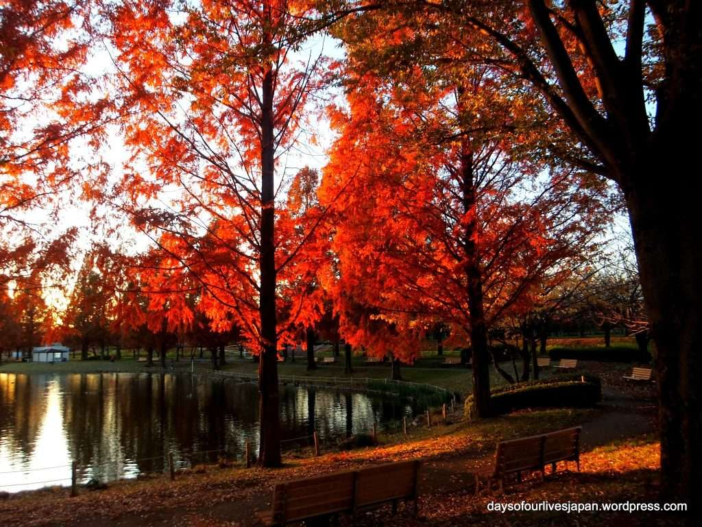 Kawagoe water park aquatic park in autumn