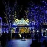Winter Night Illumination Keyaki Hiroba (2)