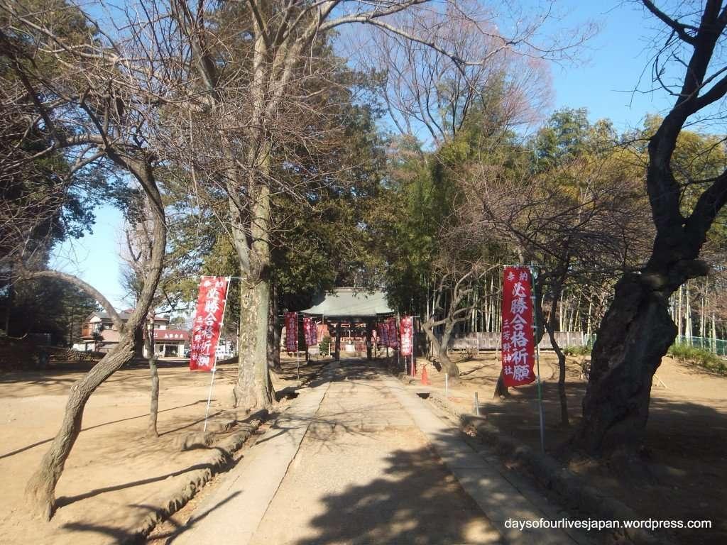 Miyoshino Shrine Kawagoe