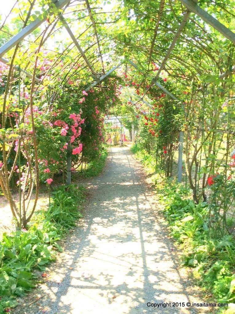 Japan's longest rose tunnel in Heisei no mori park in Kawajima