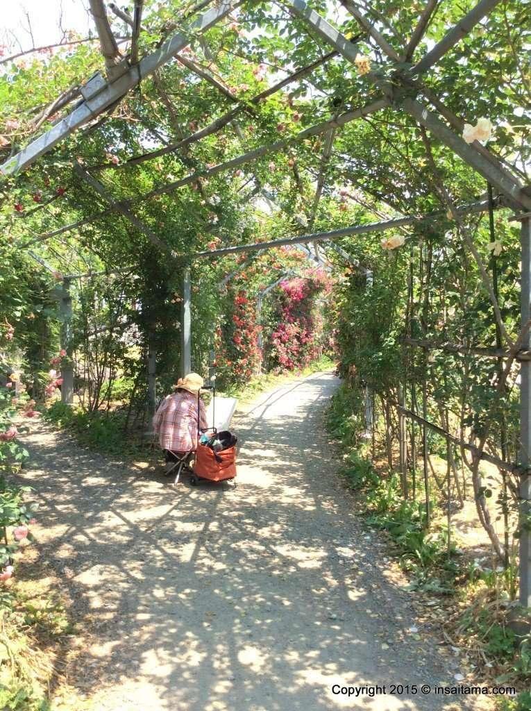 Saitama roses: Japan's longest rose tunnel in Heisei no mori park in Kawajima Saitama