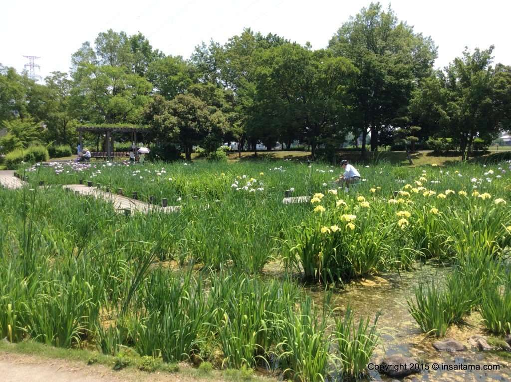 other flowers bloom in heisei no mori park near the rose tunnel
