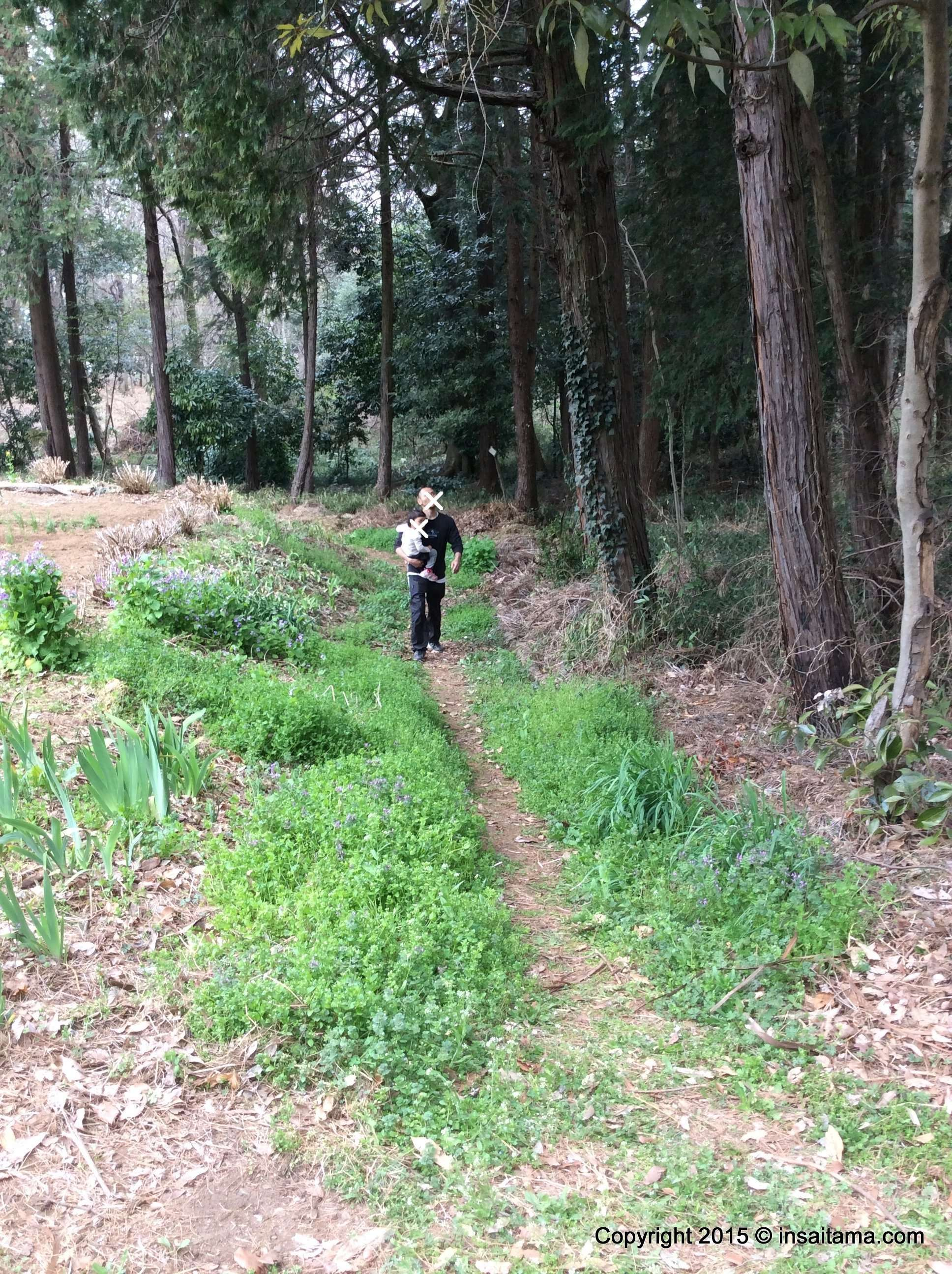 The forest in Hidaka Sougou Park, ideal for bug hunting in the summer and acorns in the winter