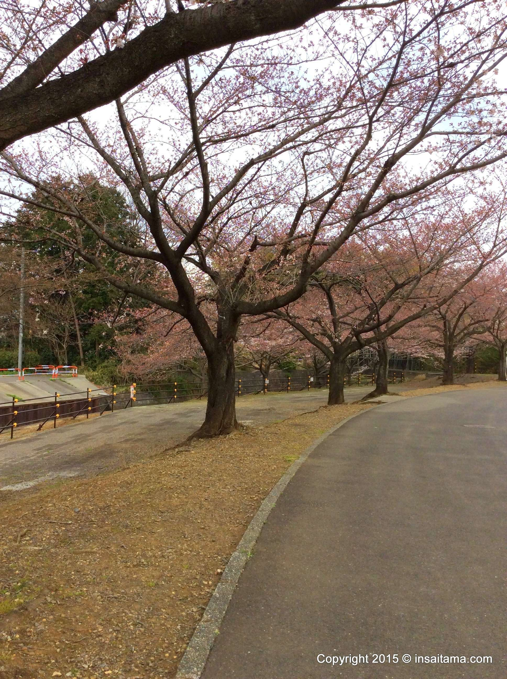 Hanami area