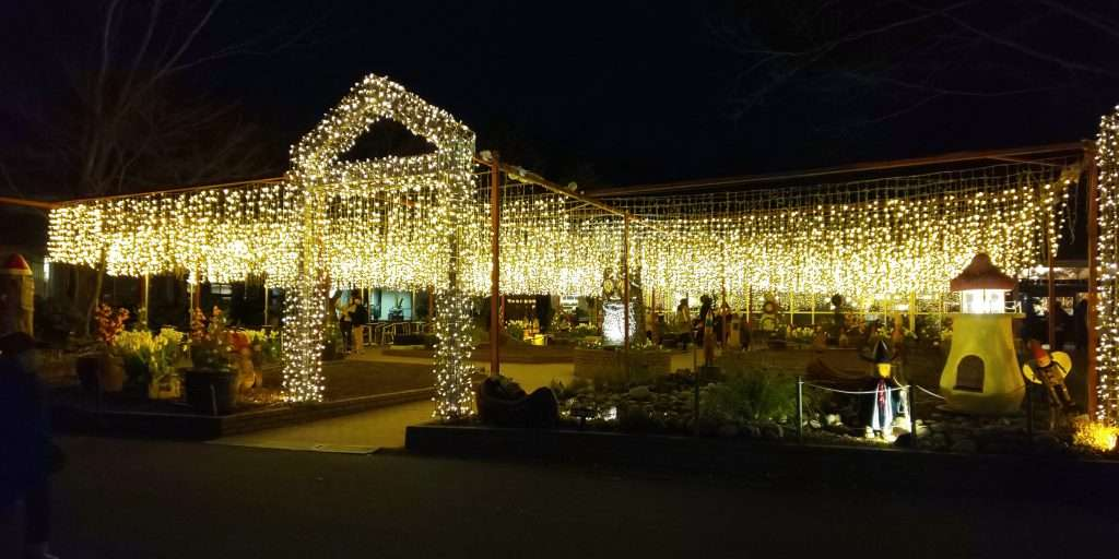 Starlight illumination at Shinrin park christmas
