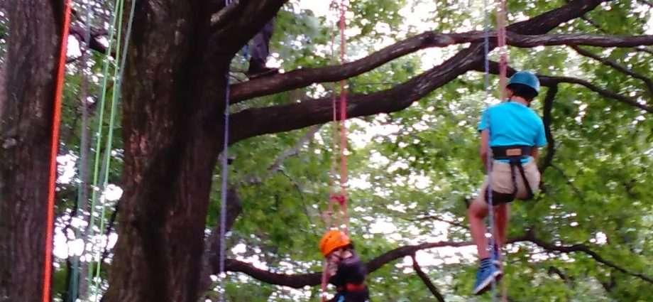 Treeing Tree climbing saitama tokyo