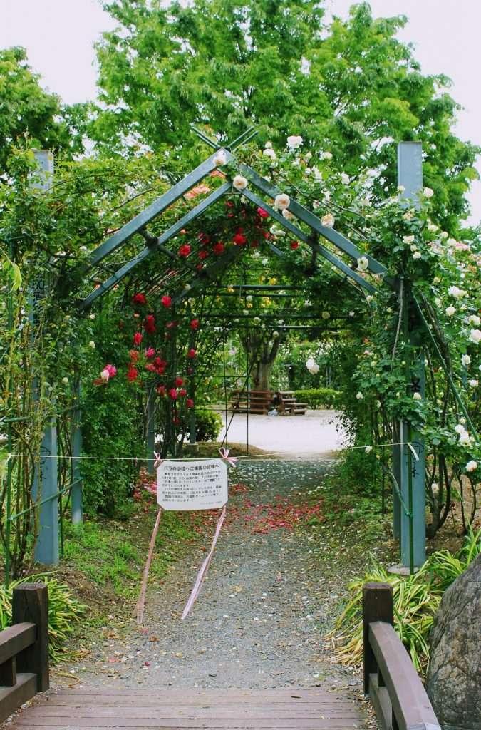 Heisei no mori rose tunnel 2020