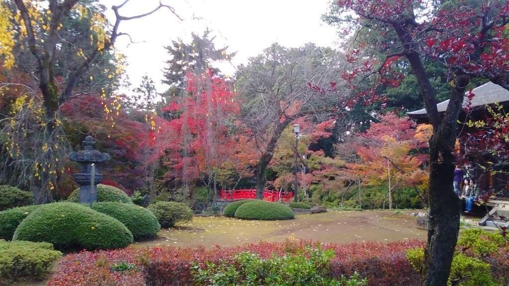 autumn leaves kitain 2015