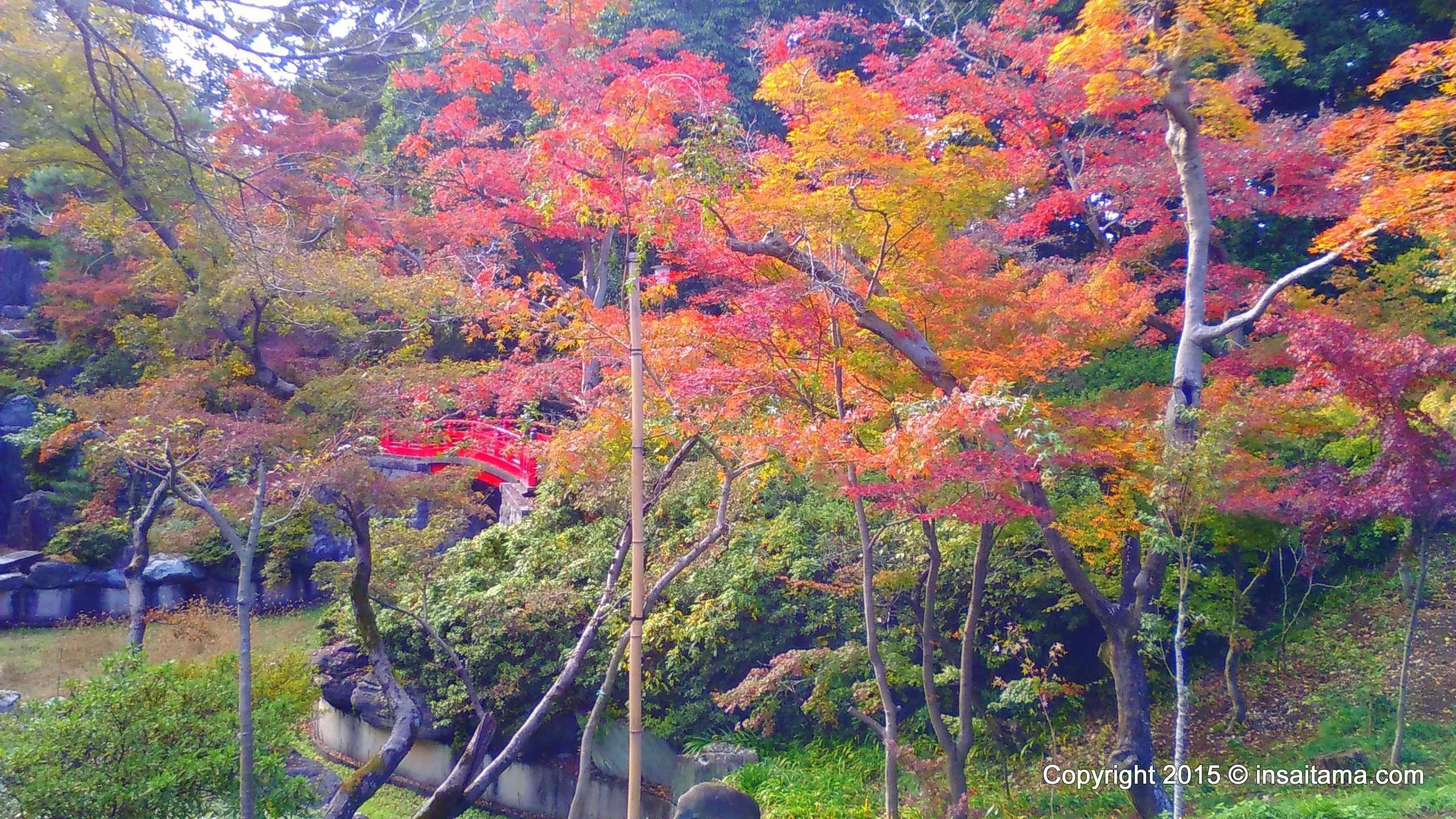 Kitain Temple gardens autumn leaves
