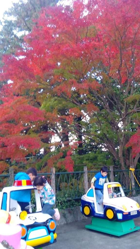 Mt Takao Autumn Leaves MT Takao with children