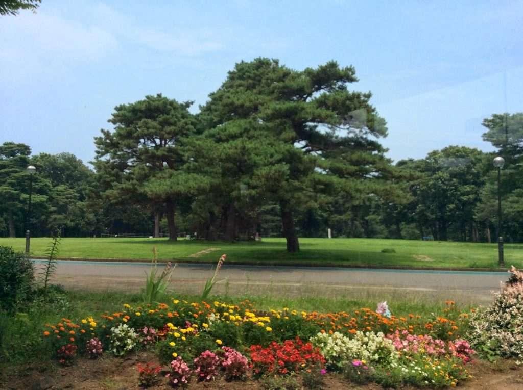 View of Inariyama park from Sayama Municipal Museum