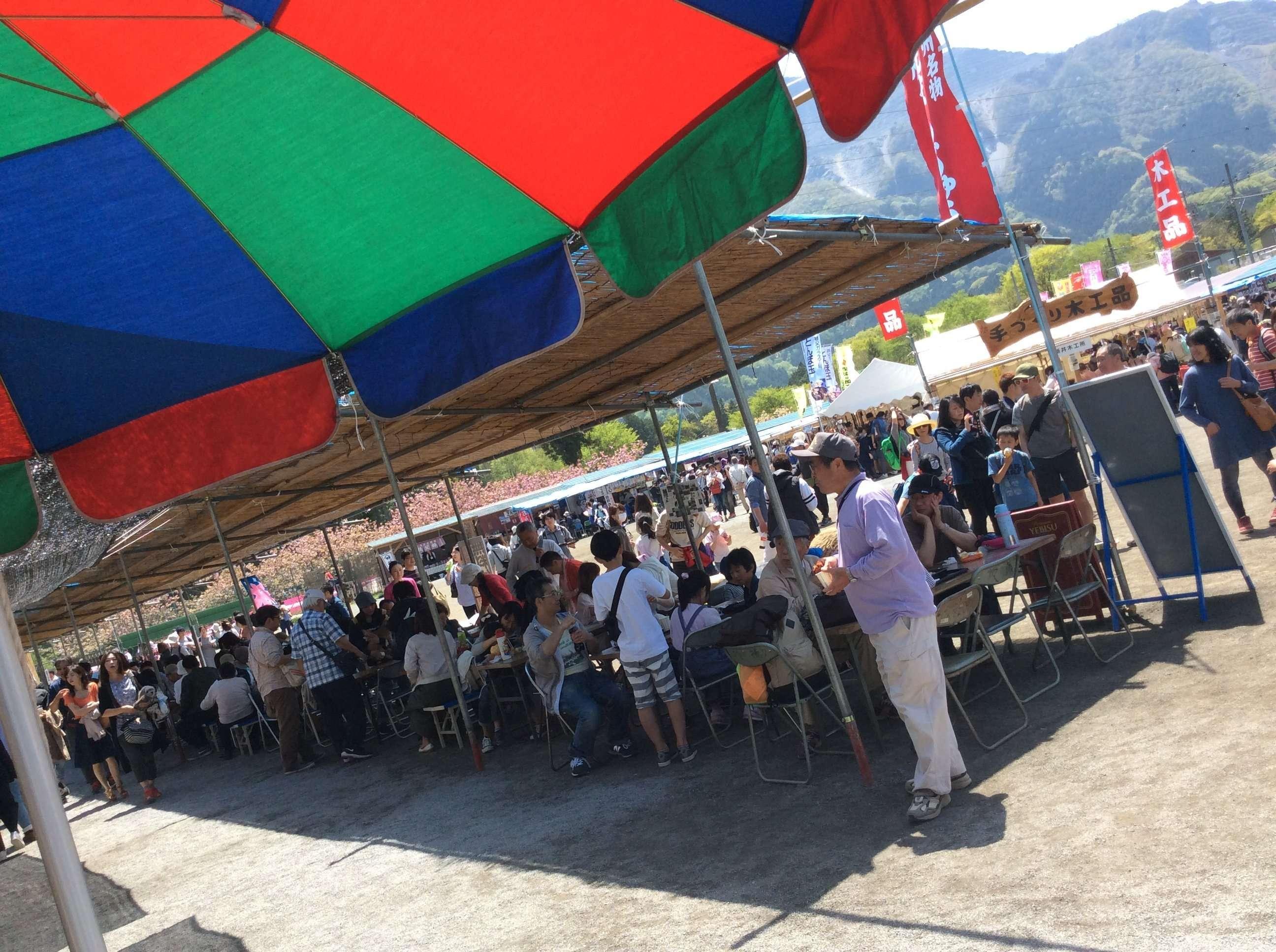 shibazakura festival in chichibu