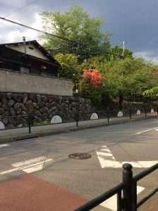 Nagatoro Cherry Blossoms