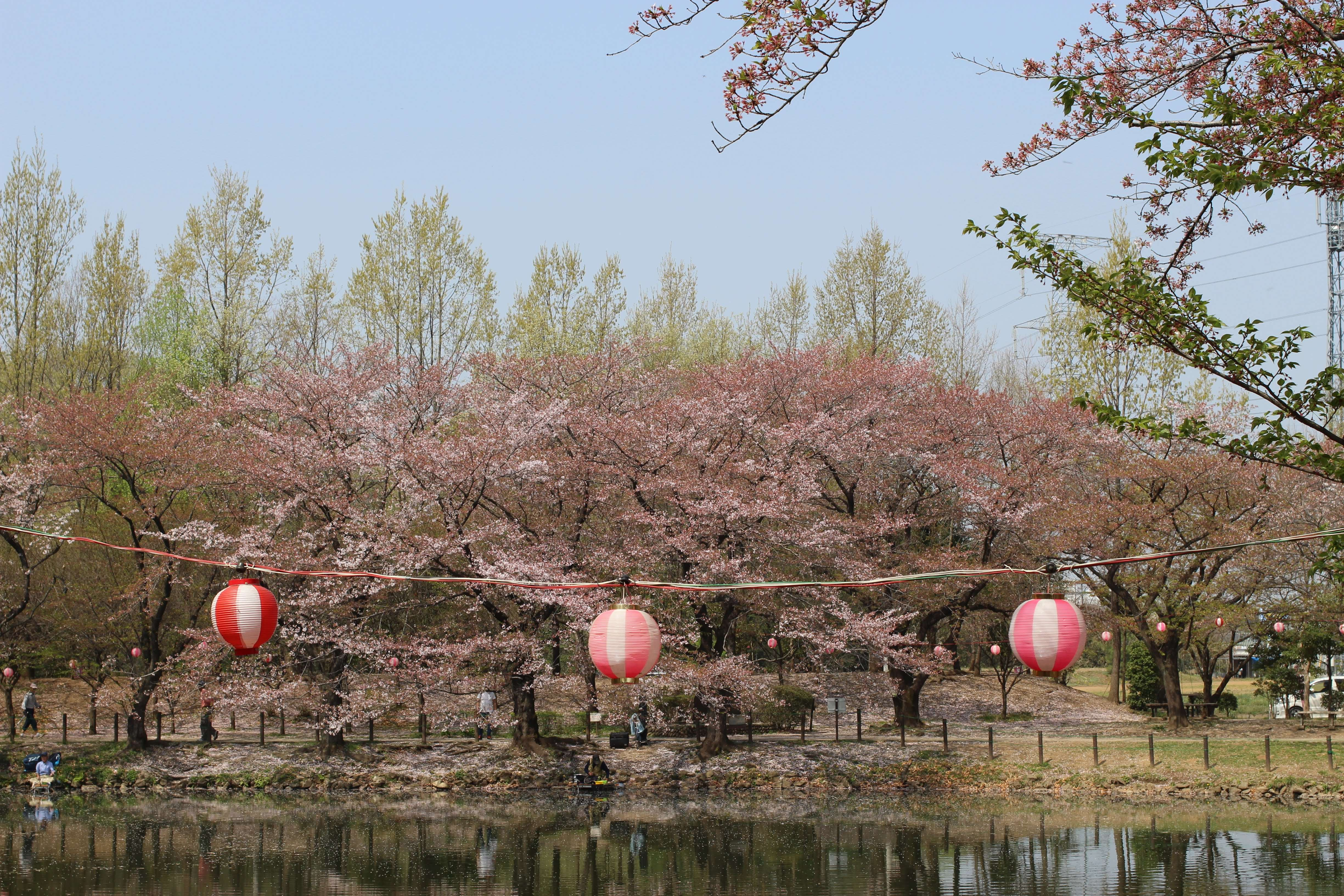 tsurugashima park