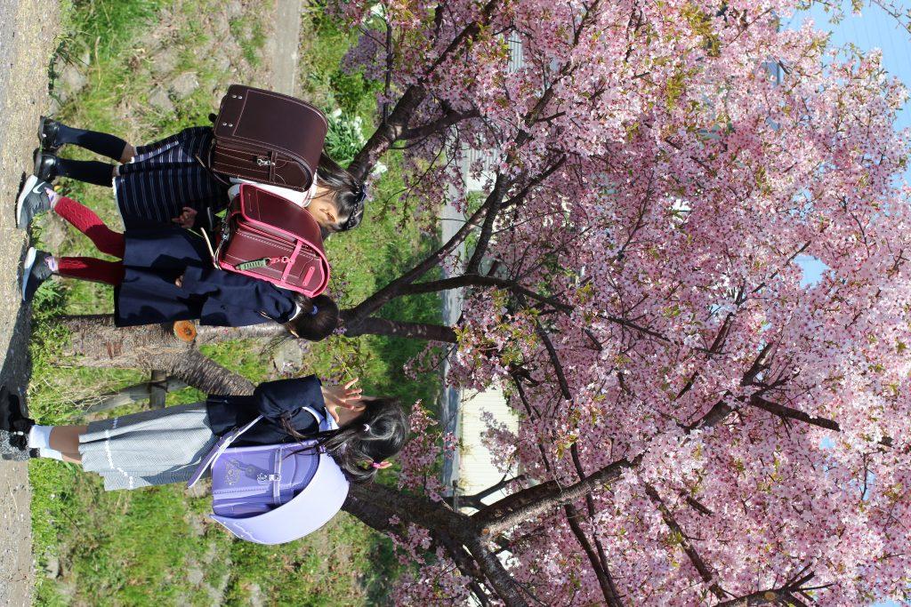 early blooming sakura and a randoseru blessing at Hikawa shrine