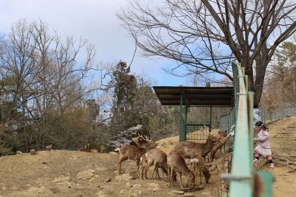 Ogano Deer Park