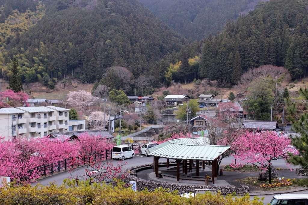 Peach blossoms Chichibu Yoshida Rocket Town Biomass facility log cabins