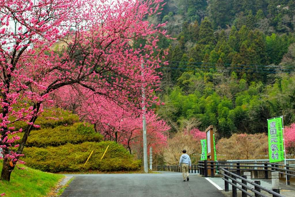 Peach blossoms Chichibu Yoshida Rocket Town Biomass facility log cabins Kakkaku Dam