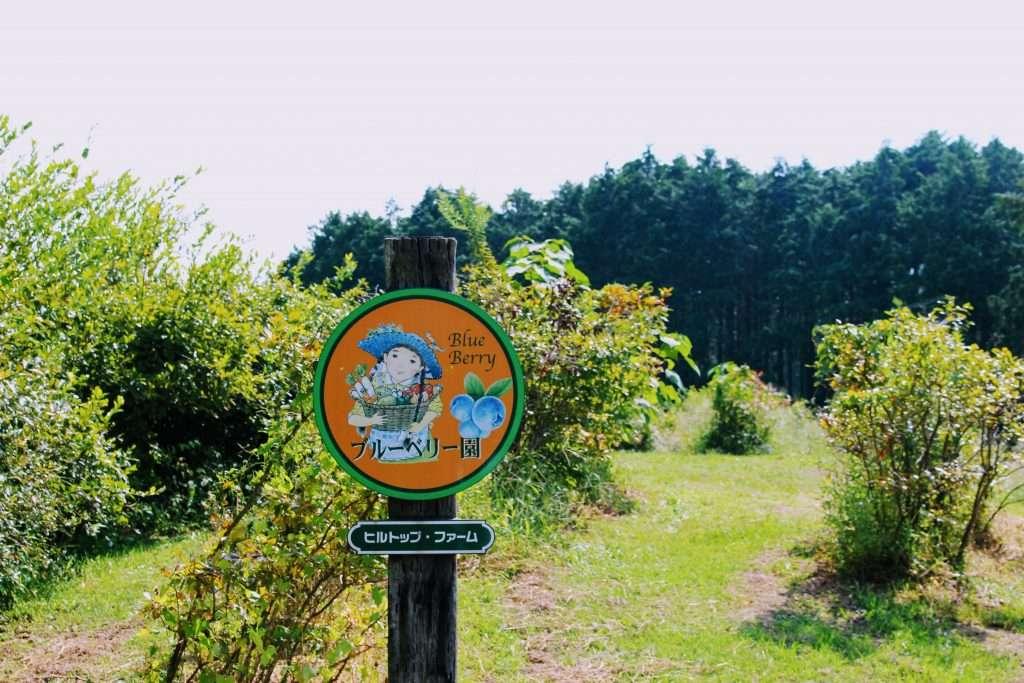 blueberry picking hilltop farm june saitama rainy season summer in saitama 2020