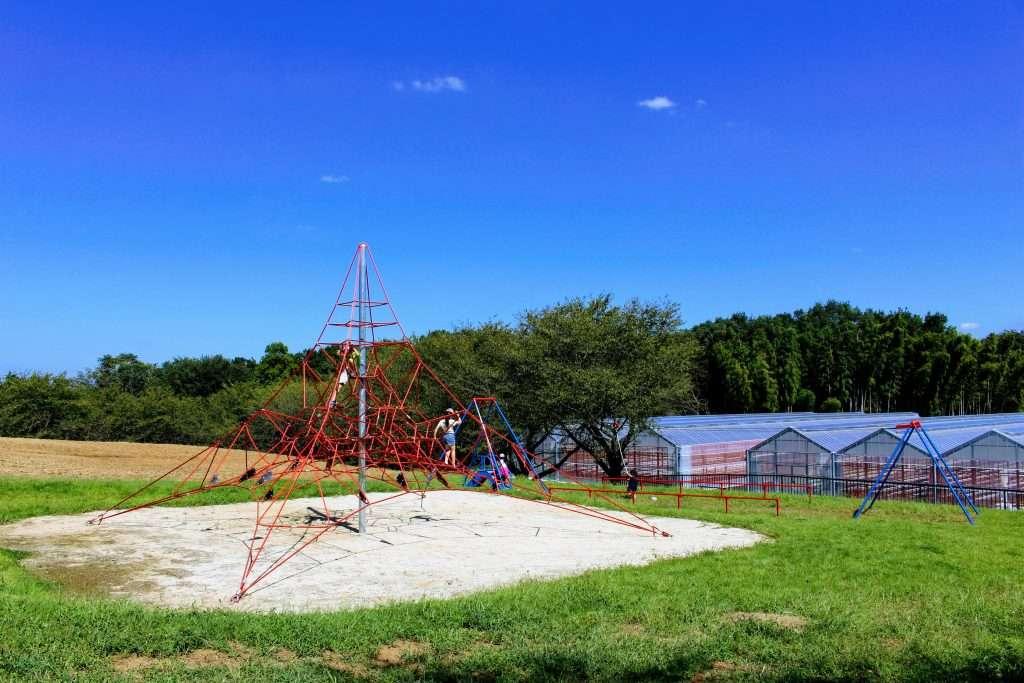 strawberry picking and play area at Higashimatsuyama agriculture park saitama