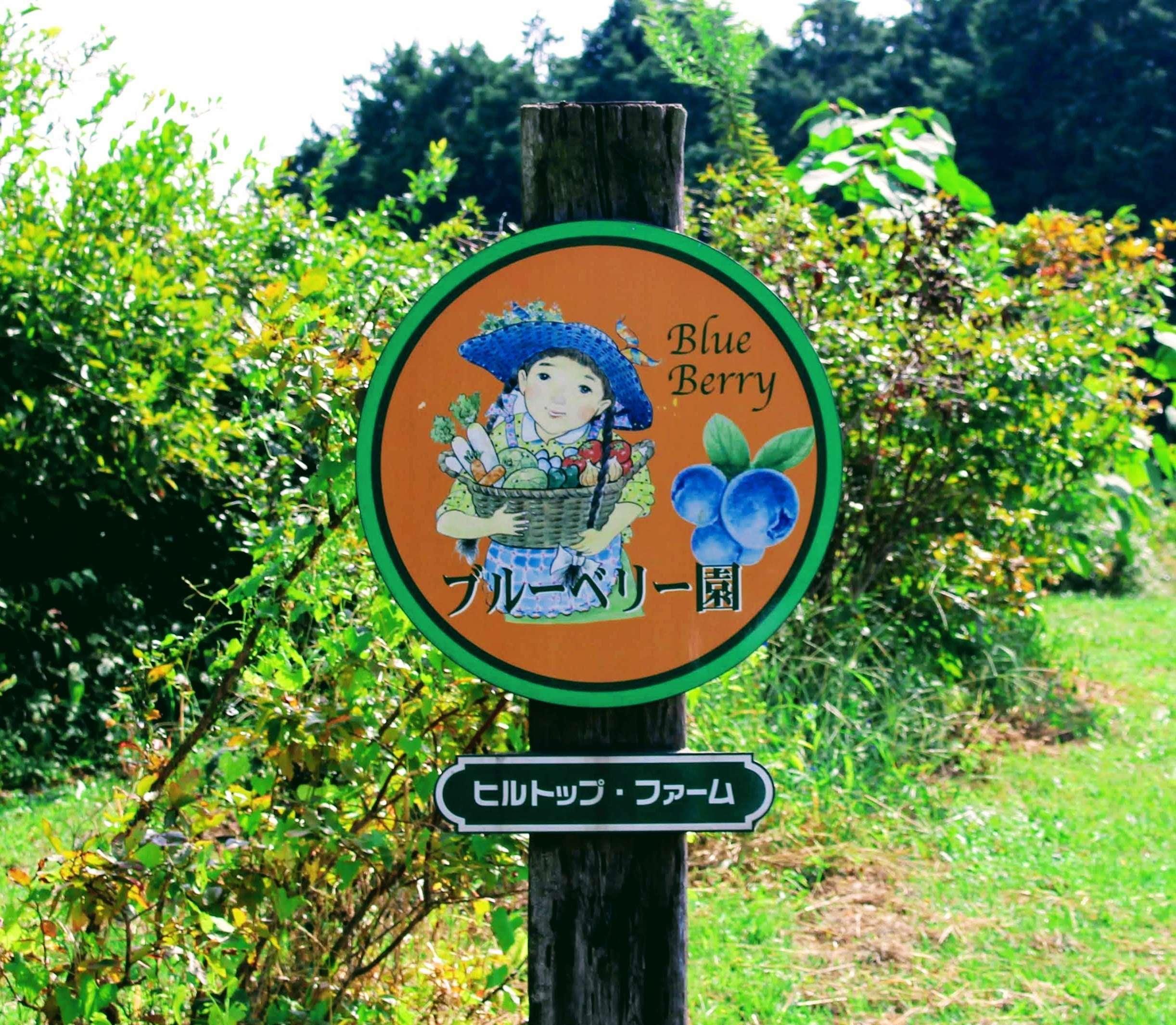 Blueberry Picking Saitama