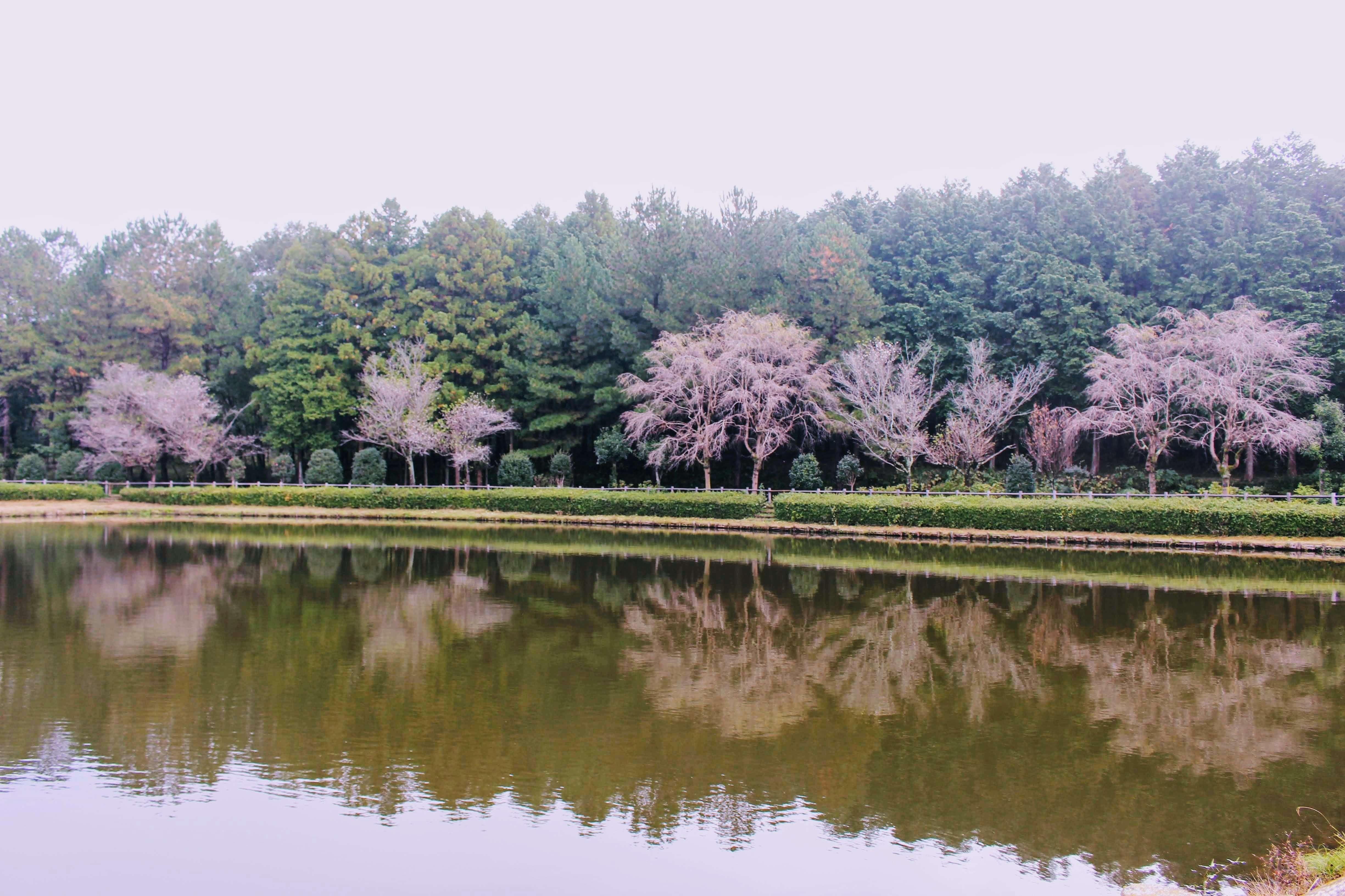 October cherry blossoms saitama hatoyama agriculture park