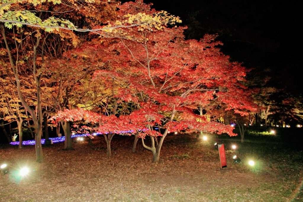 shinrin park night illumination