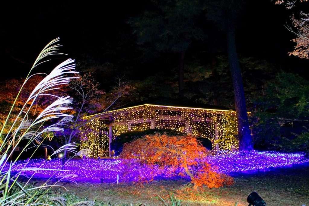 illumination shinrin park