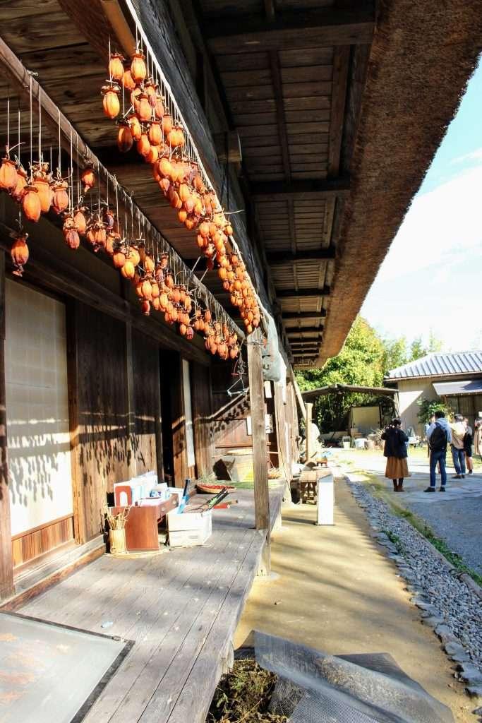 Persimmons in the sun yoshida folk house