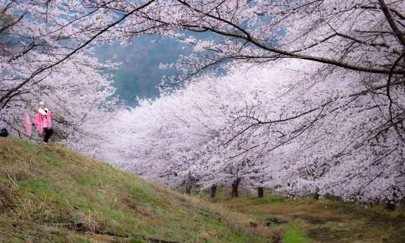 Senbonzakura Torayama Higashichichibu close to the earthly paradise of ouchizawa