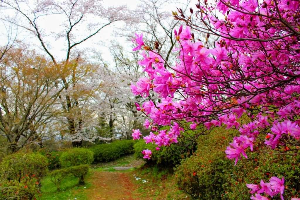 Azalea Monomiyama park insaitama