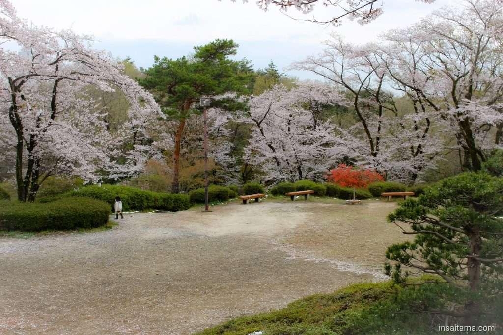 Cherry blossoms azalea Monomiyama Park
