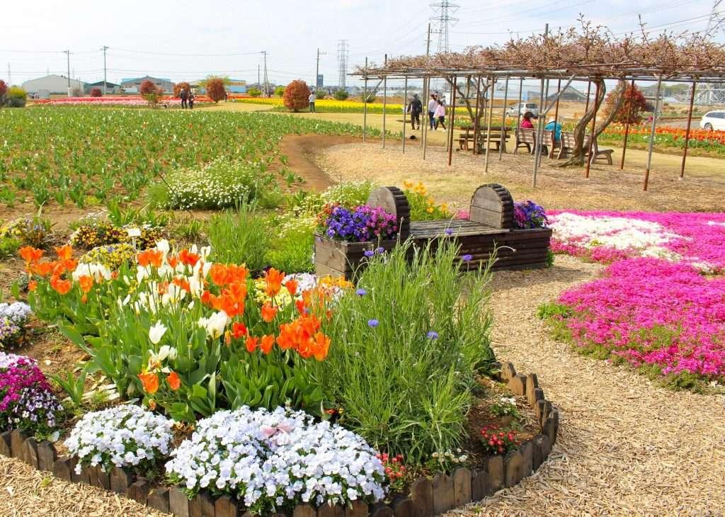 Spring flowers at Hana no Oasis