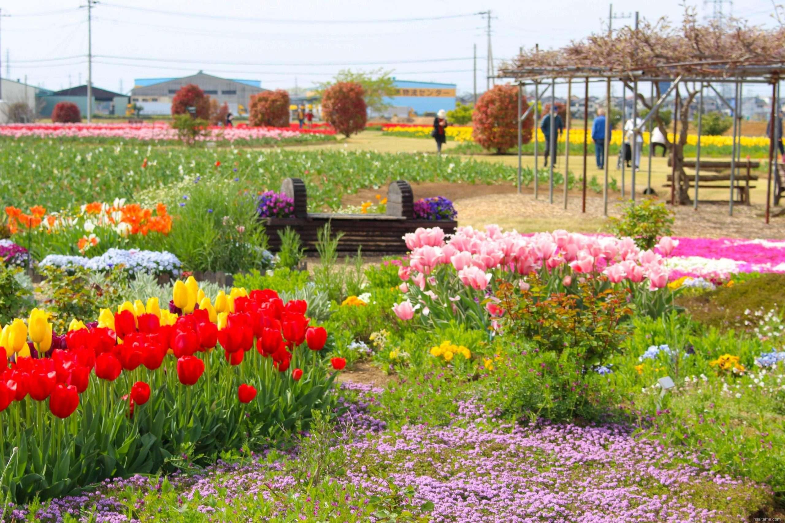 Spring flowers Hana no Oasis