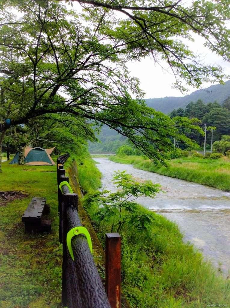 Riverside campsites under cherry blossoms. tents for rent