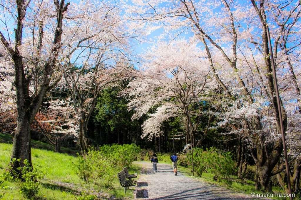sakuranoyama ogose