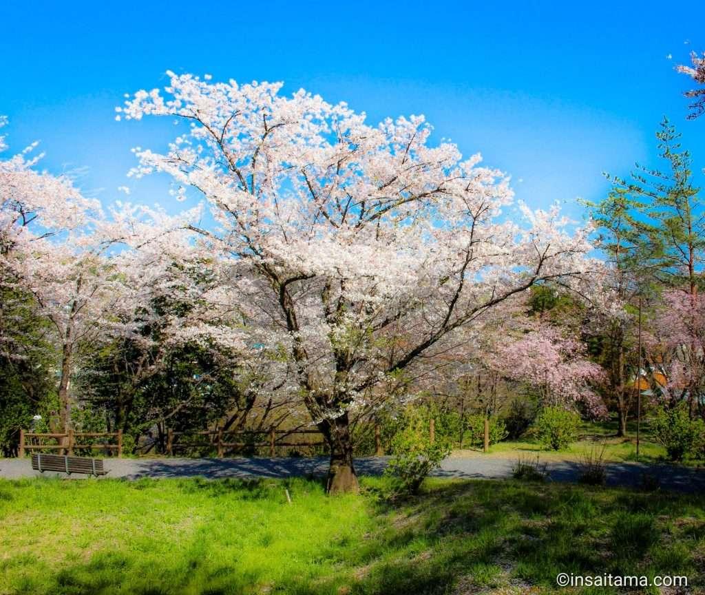 Sakuranoyama