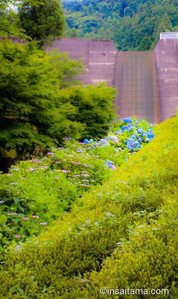 Azalea and dam Tokigawa
