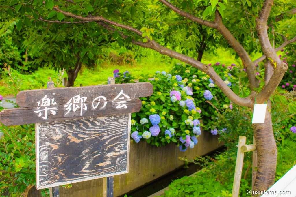 Rakusato No kai hydrangea Okegawa