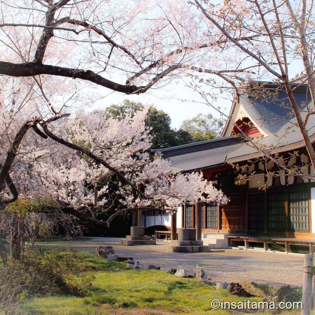 cherry blossoms at a temple in Kawajima