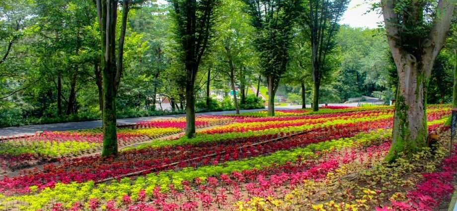 coleus flowers at shinrin park summer 2020 saitama