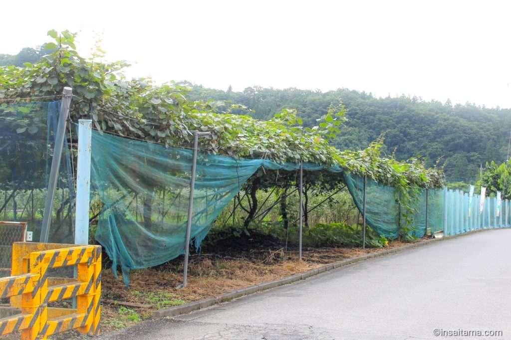 Masakado grapevines Arakawa roadside station