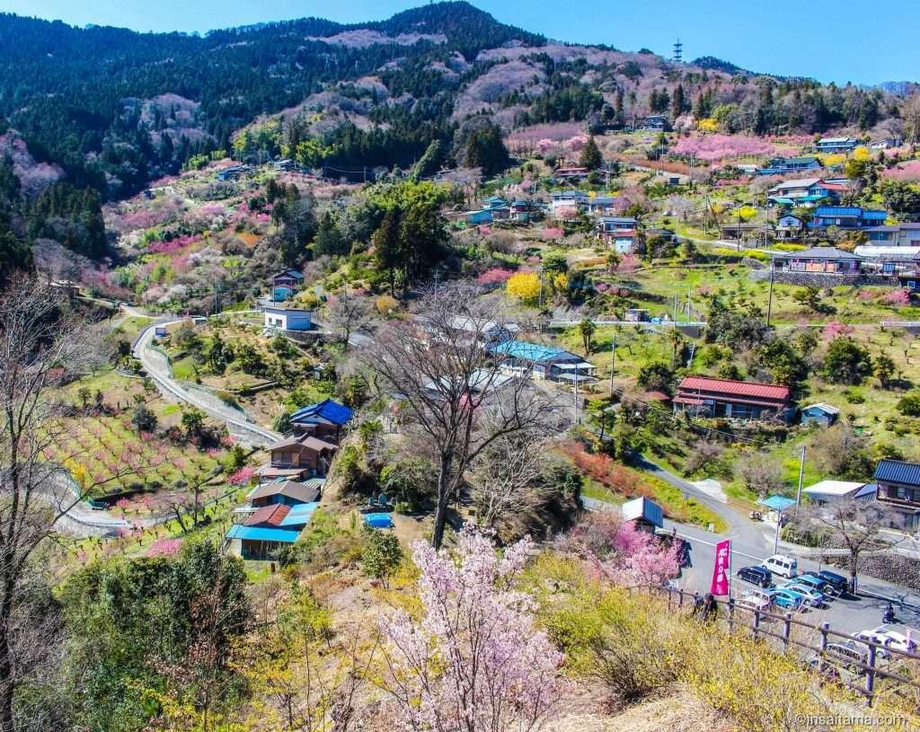 A village of peach blossoms in Saitama Prefecture