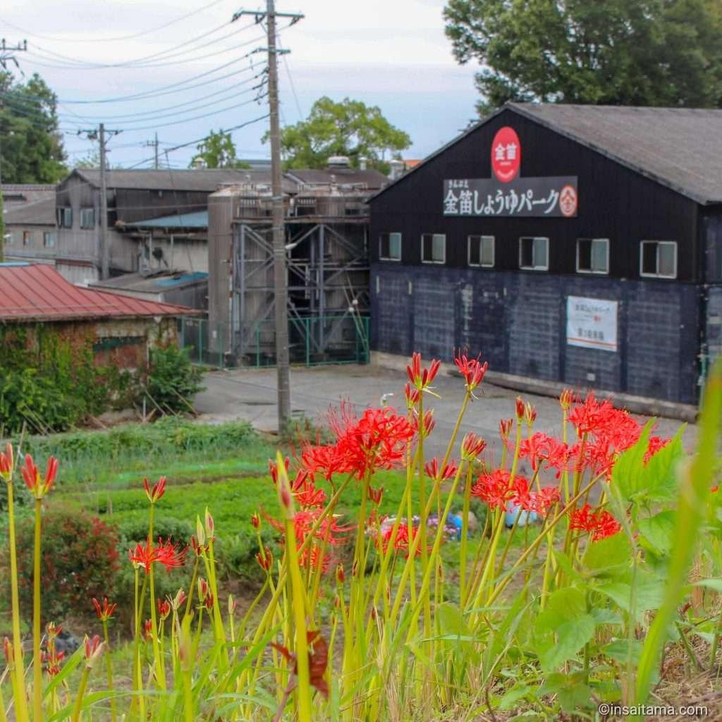 Red spider lilies Kinbue Soy Sauce Park Kawajima