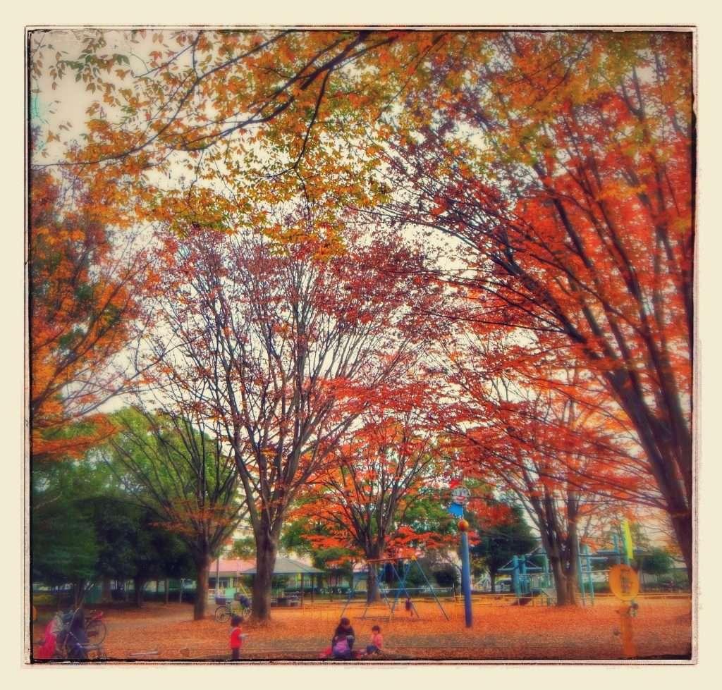 Mizohata Park Sakado November 2013